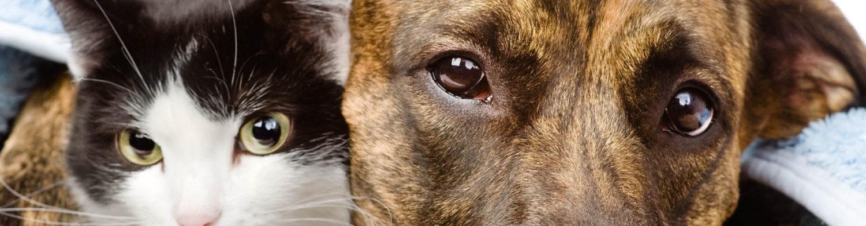 Stichting Bevordering Huisdierenwelzijn (SBH)