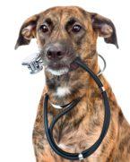 Informatie voor dierenartsen